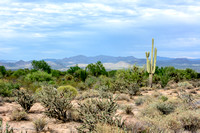 Desert scenery, greenery, and beauty.
